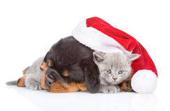 Κουτάβι Rottweiler και μικρό γατάκι στο κόκκινο καπέλο santa Απομονωμένος επάνω Στοκ Εικόνες
