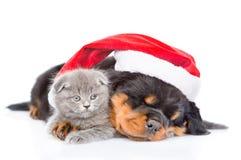 Κουτάβι Rottweiler και μικρό γατάκι στο κόκκινο καπέλο santa Απομονωμένος επάνω Στοκ Φωτογραφίες