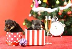 Κουτάβι Santa στο χριστουγεννιάτικο δέντρο στο παρόν κιβώτιο στοκ φωτογραφία