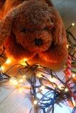 Κουτάβι Teddy που βρίσκεται στα φω'τα νεράιδων με τα θερμά χρώματα Στοκ εικόνες με δικαίωμα ελεύθερης χρήσης