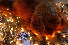 Κουτάβι Teddy που βρίσκεται στα φω'τα νεράιδων με τα θερμά χρώματα Στοκ Φωτογραφία