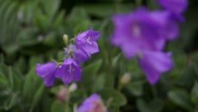 Κουδούνι-λουλούδια φιλμ μικρού μήκους