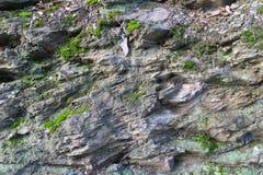 Κοφτεροί βράχοι με το βρύο Στοκ Εικόνα