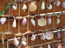 κοχύλια διχτίου του ψαρέ& στοκ εικόνες