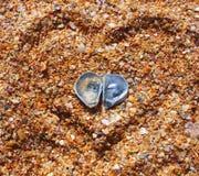 κοχύλια δύο θάλασσας πα&rho Στοκ φωτογραφία με δικαίωμα ελεύθερης χρήσης