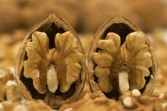 κοχύλια δύο ξύλο καρυδιά&si Στοκ Εικόνα
