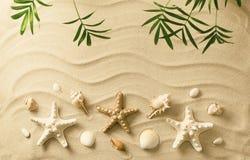 κοχύλια θάλασσας άμμου όμορφη κενή θερινή πετοσφαίριση παραλιών σφαιρών ανασκόπησης Στοκ Εικόνα