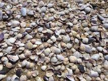 κοχύλια θάλασσας άμμου όμορφη κενή θερινή πετοσφαίριση παραλιών σφαιρών ανασκόπησης Στοκ εικόνες με δικαίωμα ελεύθερης χρήσης