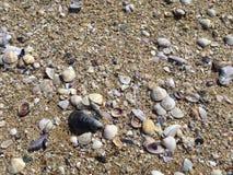κοχύλια θάλασσας άμμου όμορφη κενή θερινή πετοσφαίριση παραλιών σφαιρών ανασκόπησης Στοκ Εικόνες