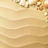 κοχύλια θάλασσας άμμου Στοκ Φωτογραφίες