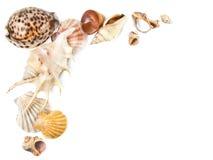 κοχύλια θάλασσας ανασκό Στοκ φωτογραφία με δικαίωμα ελεύθερης χρήσης