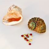 Κοχύλια θάλασσας - κράνος και τουρμπάνι Στοκ εικόνα με δικαίωμα ελεύθερης χρήσης