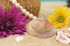 κοχύλια θάλασσας λουλ στοκ φωτογραφία με δικαίωμα ελεύθερης χρήσης
