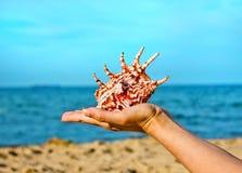Κοχύλια θάλασσας με το χέρι και τη θάλασσα ως ανασκόπηση Στοκ εικόνες με δικαίωμα ελεύθερης χρήσης