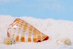 κοχύλια θάλασσας παραλιών Στοκ Φωτογραφίες