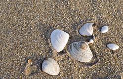 κοχύλια θάλασσας παραλ&i στοκ φωτογραφίες