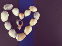 Κοχύλια θάλασσας που διαμορφώνουν ένα δάπεδο τζακιού στοκ φωτογραφία
