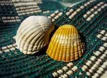 Κοχύλια θάλασσας σε ένα φυσικό υλικό βαμβακιού Στοκ Φωτογραφία