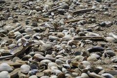 Κοχύλια θάλασσας σε μια παραλία στοκ φωτογραφία με δικαίωμα ελεύθερης χρήσης
