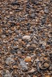 Κοχύλια θάλασσας στην παραλία στο νησί Tybee στοκ εικόνες