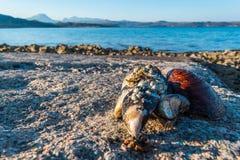 Κοχύλια θάλασσας στο έδαφος στοκ εικόνα