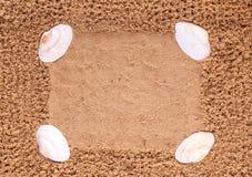 Κοχύλια θάλασσας στο υπόβαθρο της άμμου παραλιών ακτών θερινή κυματωγή πετρών άμμου της Κύπρου μεσογειακή Στοκ Εικόνα