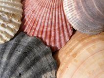 κοχύλια θάλασσας χρώματος Στοκ φωτογραφία με δικαίωμα ελεύθερης χρήσης