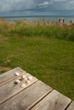 κοχύλια θάλασσας στοκ εικόνες με δικαίωμα ελεύθερης χρήσης