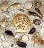 κοχύλια θάλασσας στοκ εικόνα