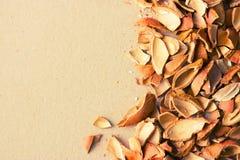 Κοχύλια καρυδιών στο φυσικό υπόβαθρο Στοκ Εικόνες
