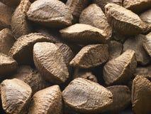 κοχύλια καρυδιών της Βραζιλίας Στοκ εικόνα με δικαίωμα ελεύθερης χρήσης