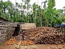 Κοχύλια καρύδων, Bagarhat, Μπανγκλαντές στοκ εικόνες με δικαίωμα ελεύθερης χρήσης