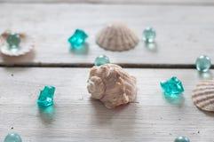 Κοχύλια, μαργαριτάρια, θάλασσα, υπόβαθρο, άσπρο υπόβαθρο, ξύλινο υπόβαθρο, κοχύλια θάλασσας Στοκ Εικόνες