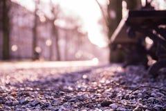 Κοχύλια πολύ ο δρόμος Στοκ Εικόνες