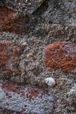 Κοχύλια στον παλαιό τοίχο Στοκ εικόνα με δικαίωμα ελεύθερης χρήσης