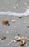κοχύλια Στοκ φωτογραφία με δικαίωμα ελεύθερης χρήσης