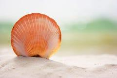 κοχύλι άμμου στοκ εικόνες με δικαίωμα ελεύθερης χρήσης