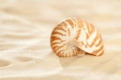 κοχύλι άμμου nautilus παραλιών μι&ka Στοκ φωτογραφία με δικαίωμα ελεύθερης χρήσης
