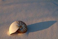 κοχύλι άμμου nautilus Στοκ φωτογραφίες με δικαίωμα ελεύθερης χρήσης