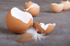 Κοχύλι αυγών Στοκ εικόνα με δικαίωμα ελεύθερης χρήσης