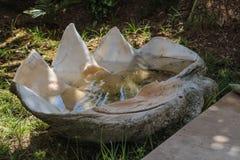 Κοχύλι βροντής που γεμίζουν με το νερό στοκ εικόνα με δικαίωμα ελεύθερης χρήσης