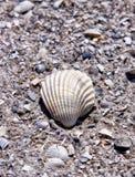 κοχύλι θάλασσας άμμου Στοκ φωτογραφία με δικαίωμα ελεύθερης χρήσης