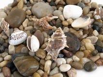 κοχύλι θάλασσας ανασκόπ&et Στοκ Εικόνα