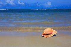 κοχύλι θάλασσας παραλιώ&n Στοκ Φωτογραφία