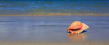 κοχύλι θάλασσας παραλιώ&n Στοκ φωτογραφία με δικαίωμα ελεύθερης χρήσης
