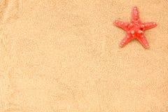 κοχύλι θάλασσας παραλιώ&n Στοκ εικόνες με δικαίωμα ελεύθερης χρήσης