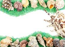 κοχύλι θάλασσας πλαισίων στοκ φωτογραφία με δικαίωμα ελεύθερης χρήσης