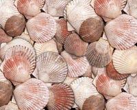 κοχύλι θάλασσας προτύπων Στοκ φωτογραφία με δικαίωμα ελεύθερης χρήσης