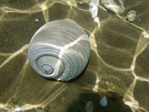 κοχύλι θάλασσας πυθμένων στοκ φωτογραφίες με δικαίωμα ελεύθερης χρήσης