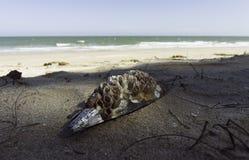 Κοχύλι θάλασσας στην παραλία με το ομαλό κύμα της θάλασσας Στοκ εικόνα με δικαίωμα ελεύθερης χρήσης